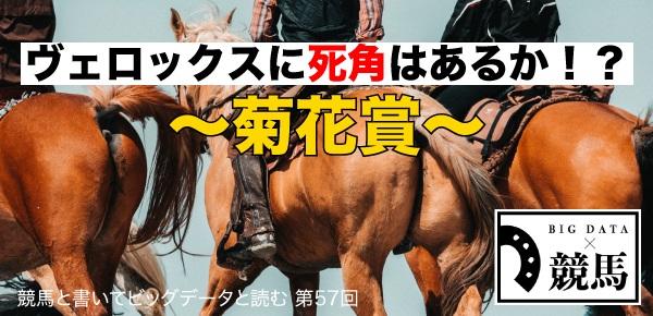 競馬第57回菊花賞